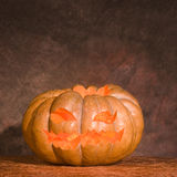 Laterne Jack-O Stockbild