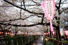 Laterne in Sakura Festival in Japan Die Laterne liest das Licht des Gottes Stockfotografie