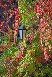 Laterne unter den roten und grünen Blättern Lizenzfreies Stockfoto