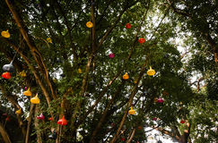 Laterns на дереве Стоковая Фотография
