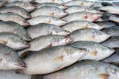 Lates calcarifer bij vissenmarkt, snapper vissen stock foto's
