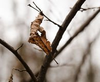 Latest leaf royalty free stock photography