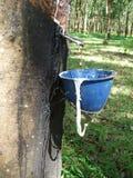 Latexsap die van rubberboom druipen Stock Foto's