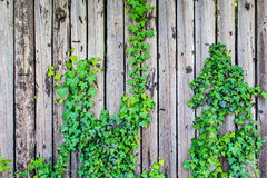 Lath fence with some nature Royalty Free Stock Photography