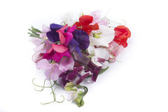 Lathyrus bouquet Stock Photos
