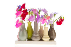 Lathyrus in little vases Royalty Free Stock Image