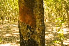 Latice di gomma dopo il taglio Fotografia Stock