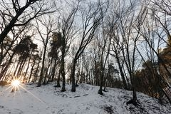 Latifoglie nell'inverno Fotografia Stock Libera da Diritti