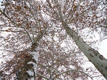 Latifoglie nell'inverno, Novi Sad, Serbia immagine stock