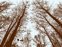 Latifoglie nella stagione di autunno Fotografia Stock Libera da Diritti