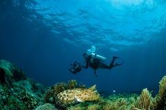 Latimanus för Broadclub bläckfiskSepia i Gorontalo, Indonesien Fotografering för Bildbyråer