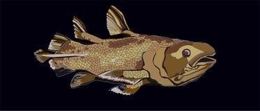 Latimeria oude vissen royalty-vrije stock foto's