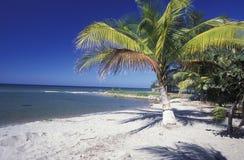 LATIN AMERICA HONDURAS CARIBIAN SEA. The Beach of Tela near San Pedro Sula on the caribian sea in Honduras in Central America Stock Image