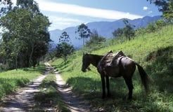 LATIN AMERICA HONDURAS GARCIAS Royalty Free Stock Photos