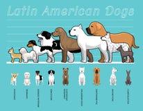 Latin - amerikansk illustration för vektor för tecknad film för uppsättning för hundkapplöpningformatjämförelse Royaltyfri Bild