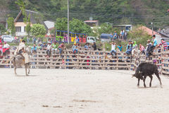 Latin cowboy competition Royalty Free Stock Image