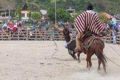 Young Latin Cowboys Chasing A Bull  Royalty Free Stock Image