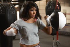 Latina Beauty Boxing Stock Photos