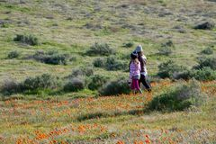 Latina Mother and Daughter in front of desert California Poppy field on path with orange and yellow flowers royalty free stock photography