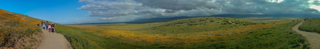 Latina Mother and Daughter walking in desert California Poppy field on path panorama royalty free stock images