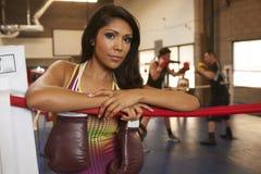 Latina skönhetboxning Royaltyfri Foto