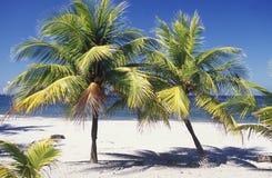 LATINAMERIKAHONDURAS CARIBIAN HAV Royaltyfria Bilder