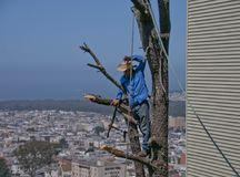 Tree Trimmer atop a tree overlooking San Francisco Suburb Royalty Free Stock Images