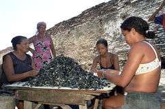 Latino women peel together mussels, Brazil. Brazil, Pernambuco, Recife city: street view in one of the most criminal slums, Santo Amaro, of the city. Women make Stock Photo