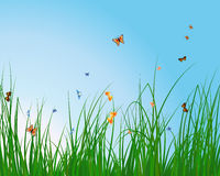 Lato łąka Obraz Royalty Free
