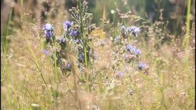 Lato łąka zbiory wideo