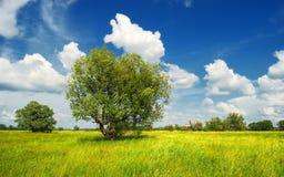 Lato łąka z drzewami i chmurami Obraz Royalty Free