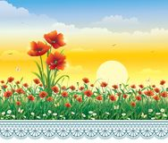 Lato łąka z maczkami i stokrotkami Obrazy Royalty Free