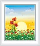 Lato łąka z maczkami i stokrotkami Fotografia Royalty Free