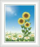 Lato łąka z słonecznikami i stokrotkami Obrazy Stock