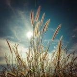 Lato łąka z wildflowers tło kwiecisty abstrakcyjne Obraz Stock