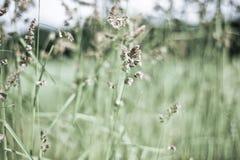 Lato łąkowa trawa Zdjęcia Stock