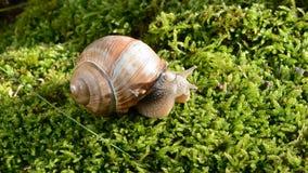 Lato ślimaczek na zielonym mech zbiory wideo
