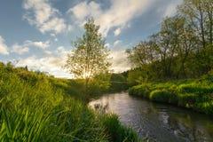 Lato świt W przedpole jaskrawy zaświecającej trawie W tle słońce przecieka gałąź Blisko zdjęcia royalty free