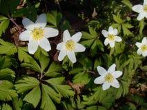 Lato bielu wildflowers Fotografia Stock