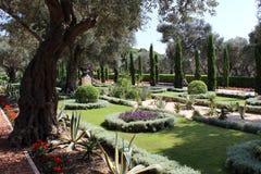 Lato blossome w Bahai ogródzie Akko Fotografia Royalty Free
