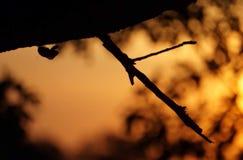 Lato cykada Fotografia Royalty Free