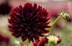 Lato czas kwitnie w kwiacie Obrazy Royalty Free