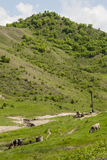 Lato czas w kraj stronie Buzau, Rumunia - Obraz Royalty Free