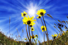 Lato czasu kwiaty Obraz Royalty Free