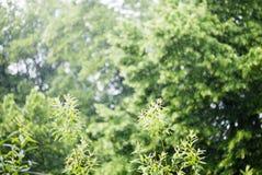 Lato dżdżysta outside ulewa obraz stock