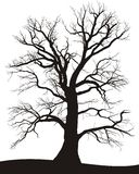 lato dębowy drzewo Ilustracja Wektor