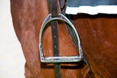 Lato del cavallo Immagini Stock