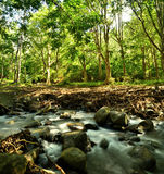 Lato del fiume in foresta Immagini Stock Libere da Diritti
