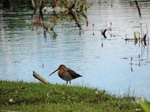 Lato del lago Fotografia Stock Libera da Diritti