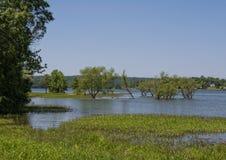 Lato del lago di estate Fotografia Stock